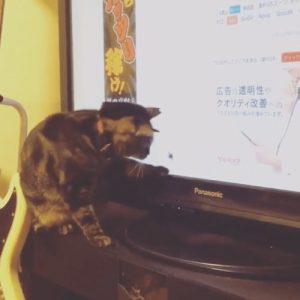 ねことマウス1