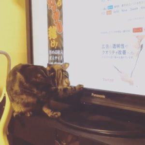 ねことマウス2