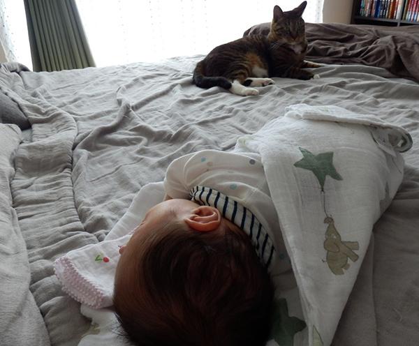 赤ちゃんのそばにきてひと休み中。