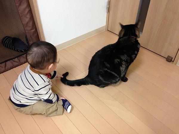 猫の尻尾を触る赤ちゃん