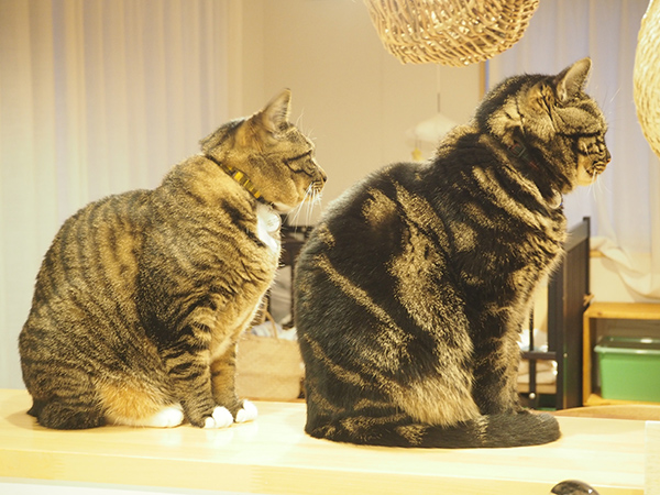 同じ格好で佇む猫二匹