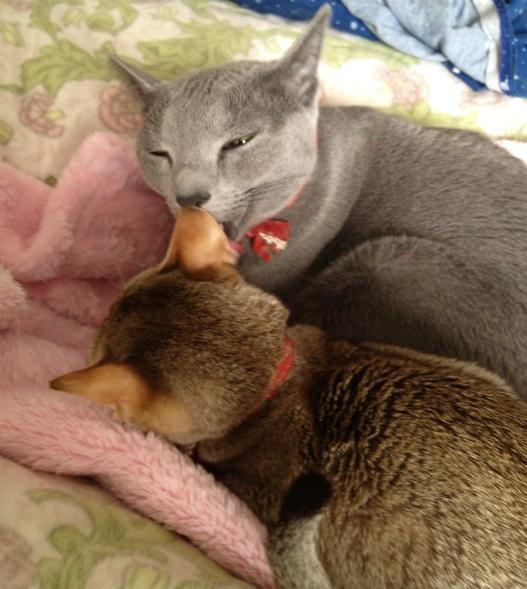 母猫と子猫のようにも見えました。