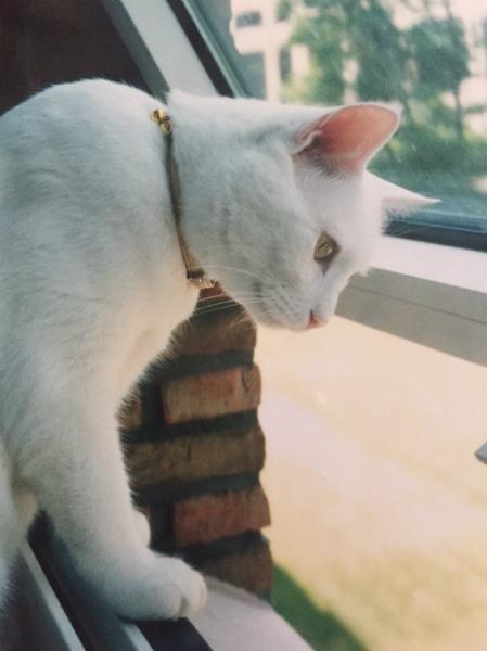 筆者ベルギー在住時代の愛猫