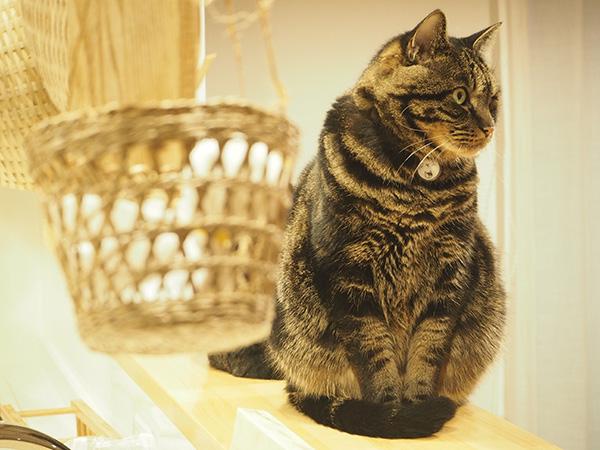 我が家の猫ちゃん