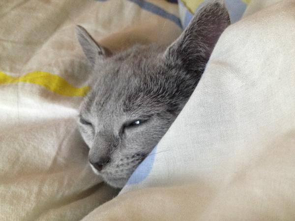 猫のイメージ写真1