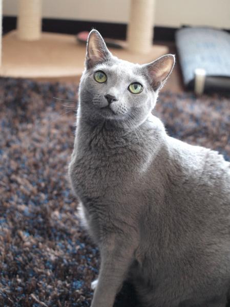 猫の瞳には、人間の言葉以上の力が宿っているのかもしれません
