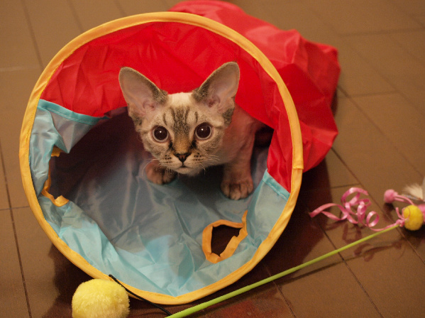 ほかの猫とはオモチャの共有も控えましょう