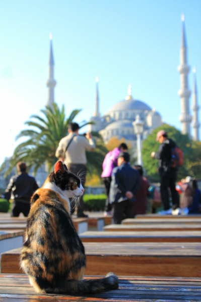 猫とブルーモスク