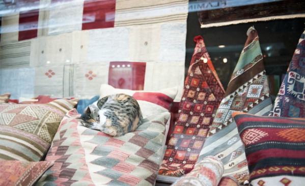 売り物である絨毯の上で昼寝