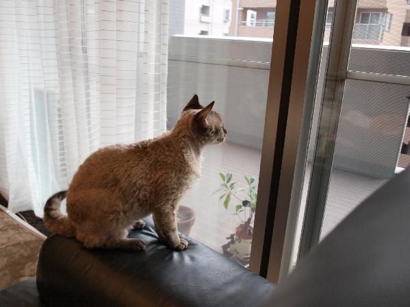 今も昔も、何を考えながら外を眺めているのでしょう