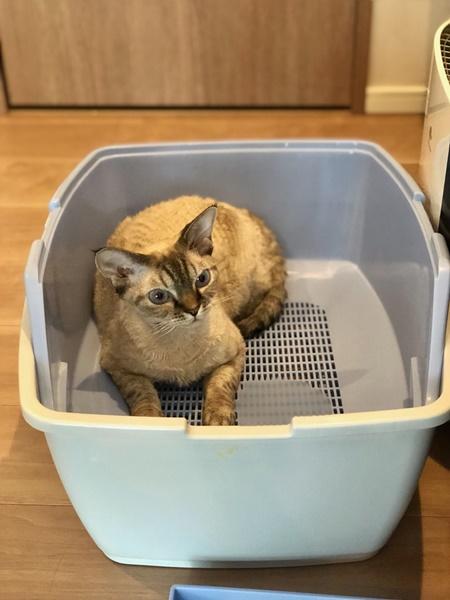 トイレはこまめに丸洗いして乾燥!