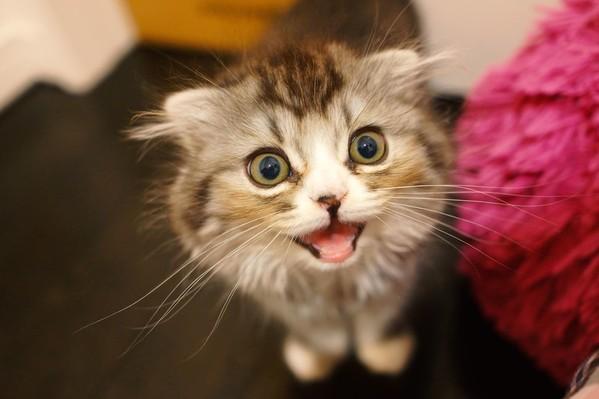 子猫の要求をわかってあげよう!