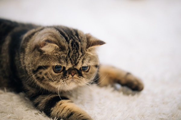 猫もやきもちを焼くの?