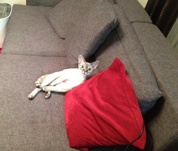 最初に置いていた布のソファ