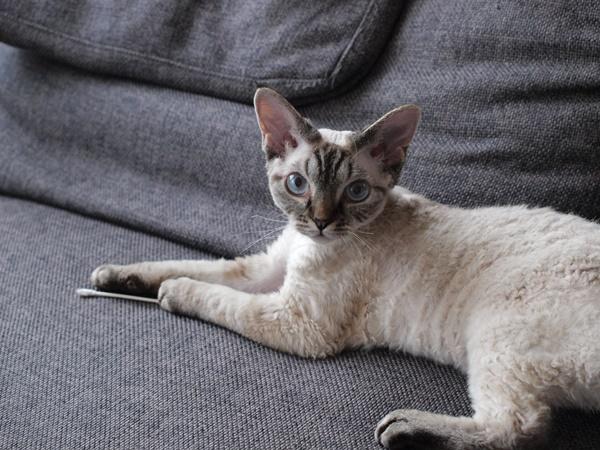 ソファの上で綿棒遊び