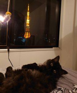 セルカーク・レックスと東京タワー