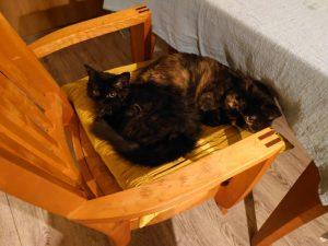 レイラの暴れっぷりに困っている先住猫たち