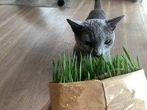 夏場だったためか、早めに成長。 愛猫も興味しんしん